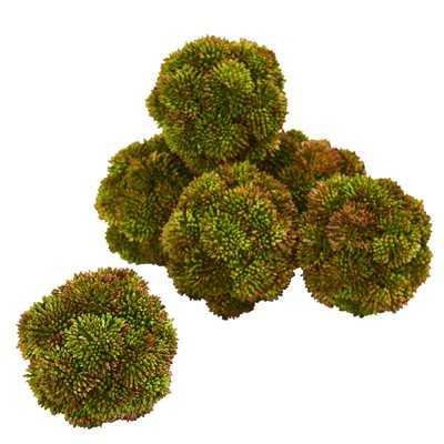 Sedum Spheres Desktop Succulent Topiary - Wayfair