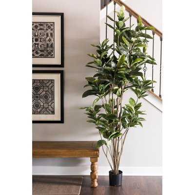 Artificial Foliage Rubber Tree in Pot - Wayfair
