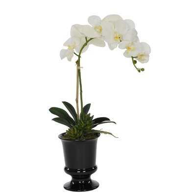 Artificial Phalaenopsis Orchid in Urn - Birch Lane