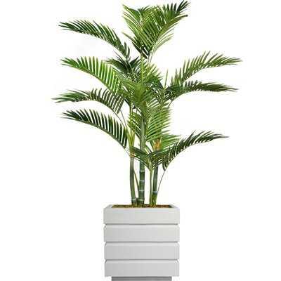 Floor Tall Palm Tree in Planter - Wayfair