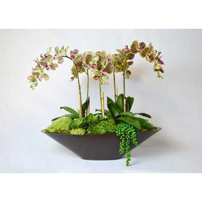 Orchid Floral Arrangement in Metal Pot - AllModern