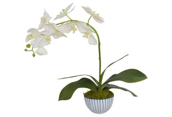 White Phal Orchid in Planter, Faux - One Kings Lane
