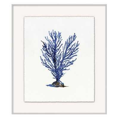 Coral Branch, Series 1 - Williams Sonoma