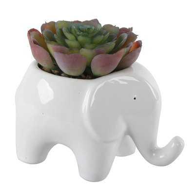 Ceramic Elephant Desktop Succulent Plant in Pot - Wayfair