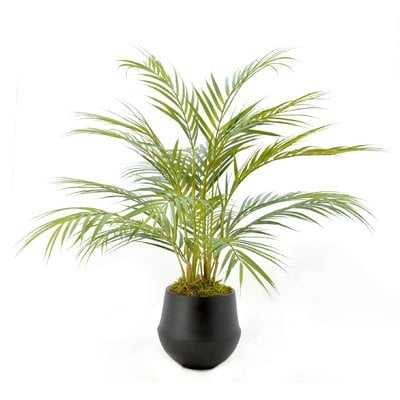Floor Palm Plant in Pot - Wayfair
