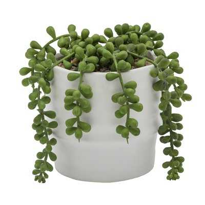 String of Pearls Ceramic Two Tone Agave Plant in Planter - Wayfair