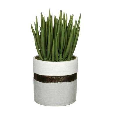 Artificial Sea Sanded Ceramic Aloe Plant in Decorative Vase - Wayfair