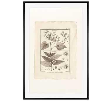 "Botanical Plate 468, 28 x 42"", Wood Gallery, Black, Mat - Pottery Barn"