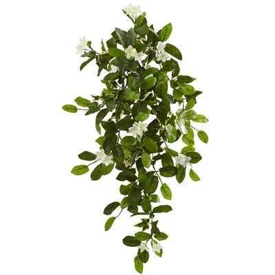 Mixed Stephanotis Hanging Ivy Plant - Wayfair