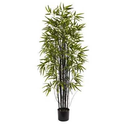 Black Bamboo Tree in Pot - Wayfair