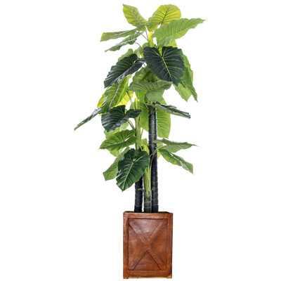 Indoor/Outdoor Fiberstone Floor Elephant Ear Tree in Planter - Wayfair