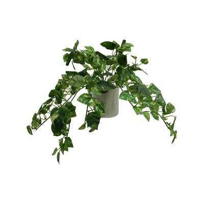Modern Pothos Tabletop Ivy in Pot - Wayfair