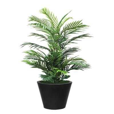 Palm Plant in Planter - Wayfair