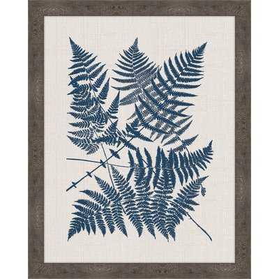 Polypodies Ferns' Framed Graphic Art Print - Wayfair