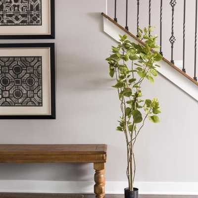 5 ft. Cotinus Coggygria Tree with Pot-Green, Greens - Home Depot