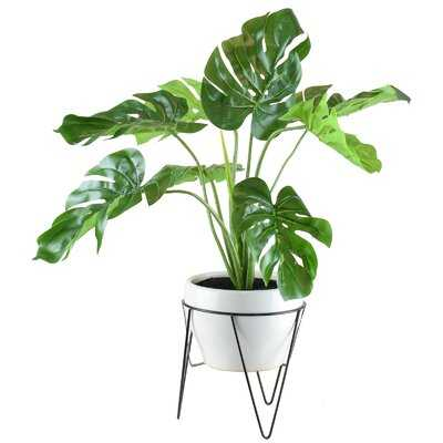 Monstera Foliage Plant in Pot (faux) - Wayfair
