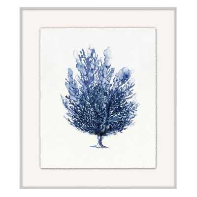 Coral Branch, Series 2 - Williams Sonoma