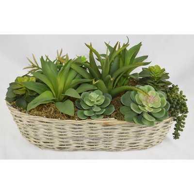 Desktop Succulents Plant in Basket - Wayfair