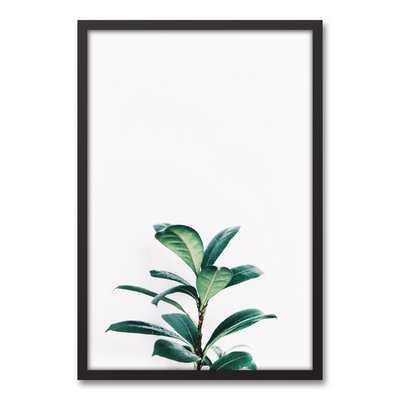 'Fig Tree' Framed Photograph On Canvas - Wayfair