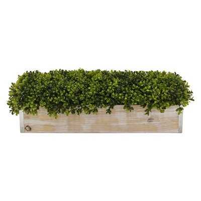 Faux Boxwood Topiary in Pot - Wayfair