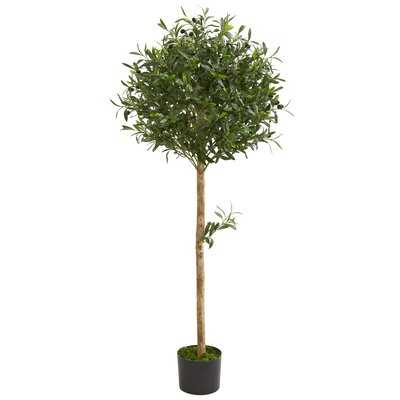 Olive Topiary Floor Foliage Topiary in Planter - Wayfair