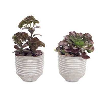 Potted Desktop Succulent Plant - Wayfair