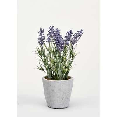 Lavender Foliage in Pot - Wayfair