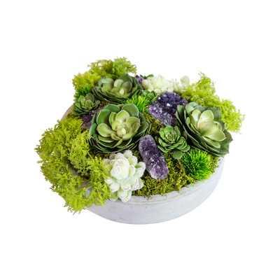 Succulents in Concrete Bowl - AllModern