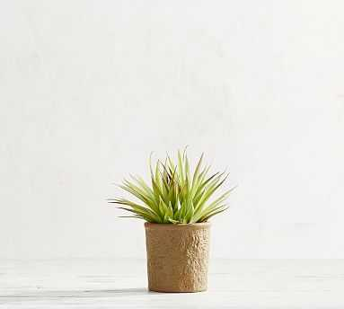 Faux Potted Spikey Succulent - Pottery Barn