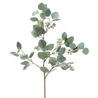 Eucalyptus Stem Desktop Foliage Plant - Wayfair