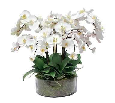 Faux Phalaenopsis In Open Glass Vase, White - Pottery Barn