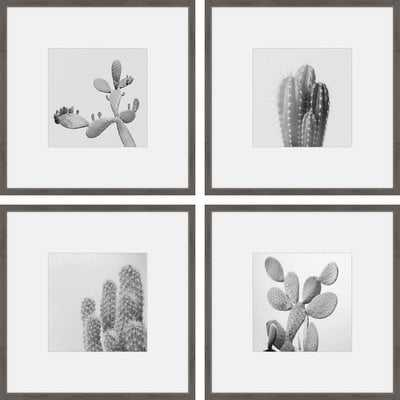 'Cacti Types Quadriptych' 4 Piece Framed Graphic Art Print Set on Paper - Wayfair