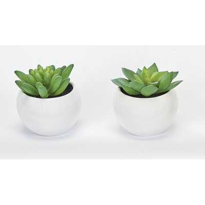 Succulent Desktop Plant in Pot (Set of 2) - Wayfair