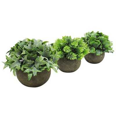 3 Piece Grass Pine Leaf Mix Ivy Plant in Pot Set - Wayfair