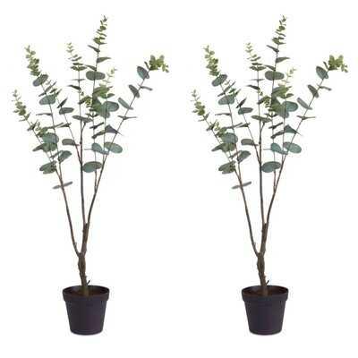 Eucalyptus Plant in Planter - Wayfair