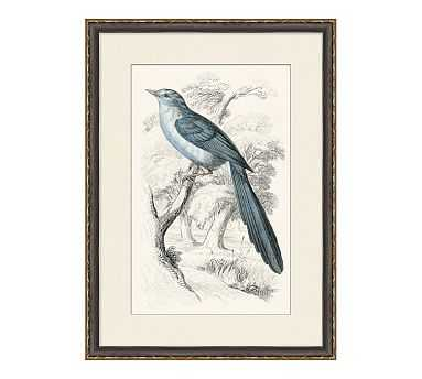 Traditional Bird 2 - 22 x 30 - Pottery Barn