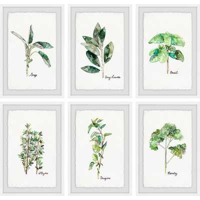 'Herb Family II Hexaptych' 6 Piece Framed Watercolor Painting Print Set - Birch Lane