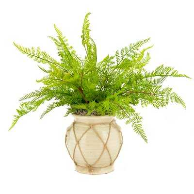 Faux Fern in Twine-Wrapped Vase - Wayfair