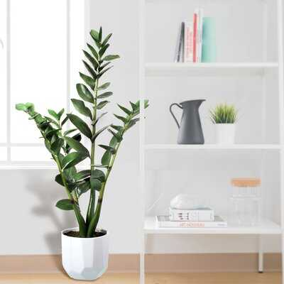 PU Money Plant in Pot - Wayfair