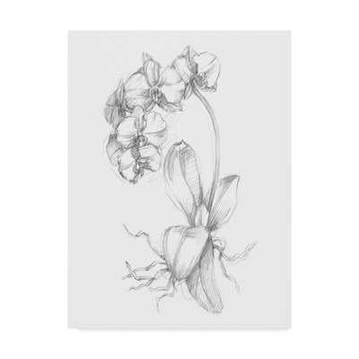 'Botanical Sketch V' Drawing Print on Wrapped Canvas - Wayfair