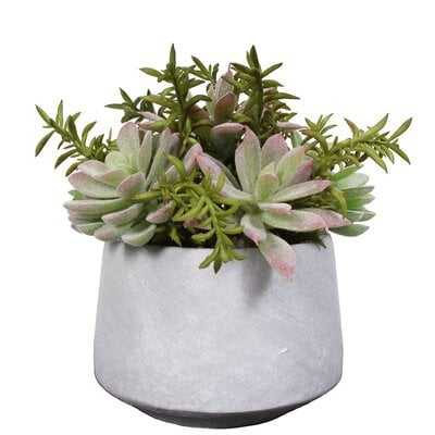 Cozy Elements Artifical Mixed Snake Plant and Aloe Succulent in Pot Set of Two - Wayfair