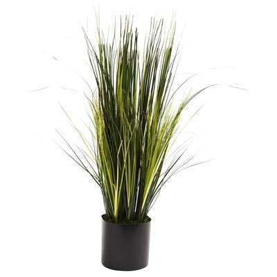 Onion Grass Floor Plant in Pot - Wayfair