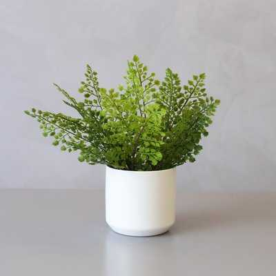Artificial Adiantum Desktop Palm Plant in Pot - Wayfair
