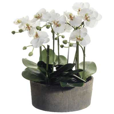 Phalaenopsis Orchid Floral Arrangements in Clay Pot - Birch Lane