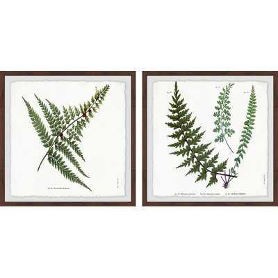 'Fern Leaves Diptych' 2 Piece Framed Graphic Art Print Set - Birch Lane