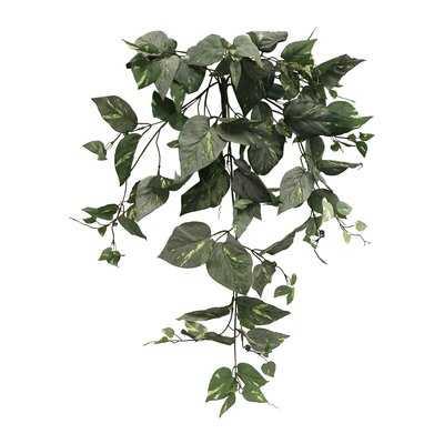 Pothos Hanging Foliage Plant - Wayfair
