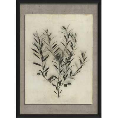 Olive Branch Framed Photographic Print - Wayfair