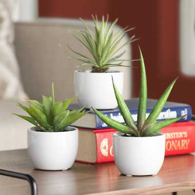 Aldorough 3 Piece Faux Southwest Succulent Set - Wayfair