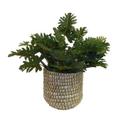 Faux Boxwood Desktop Plant in Modern Sea Grass Basket - Wayfair