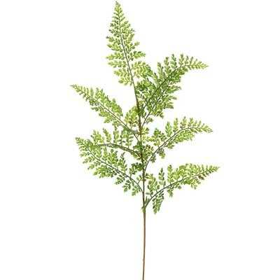 Fern Stem Plant - set of 6 - Wayfair